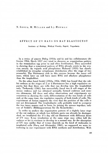 Effect of UV rays on rat blastocyst