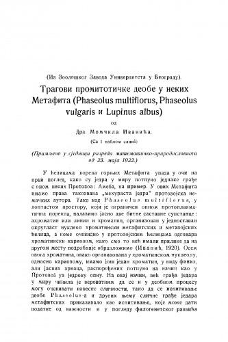Tragovi promitotičke deobe u nekih Metafita (Phaseolus vulgaris i Lupinus albus)