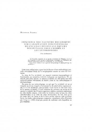 Influence des facteurs mecaniques sur l´adaptation functionnelle de l´Ecaille Occipitale (Squama occipitalis) chez l´Homme et les Anthropoides