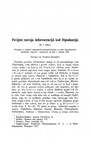 Povijest razvoja inflorescencijâ kod Dipsakacejâ