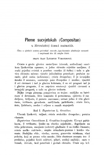 Pleme sucvjetakah (Compositae) : u Hrvatskoj dosad našastih : RAD