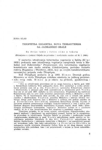 Thiophysa gigantea, nova tiobakterija sa Jadranske obale