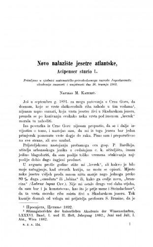 Novo nalazište jesetre atlantske, Acipenser sturio L.