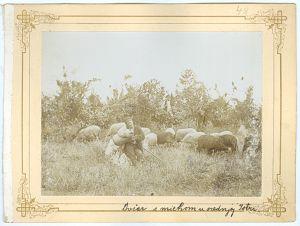 Ovčar s miehom u srednjoj Istri [Ptašinsky, Josef (1863-1908) ]
