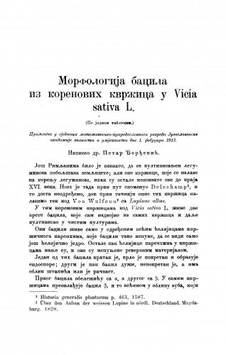 Morfologija bacila iz korenovih kvržica u Vicia sativa L.