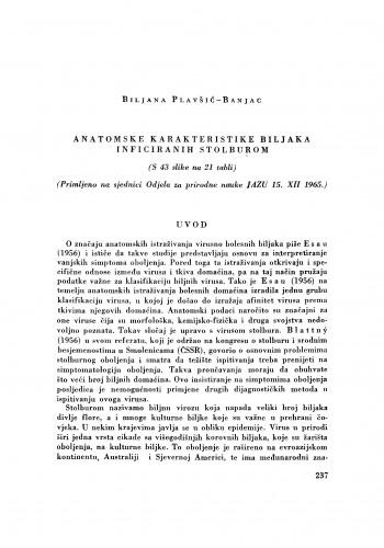 Anatomske karakteristike biljaka inficiranih stolburom