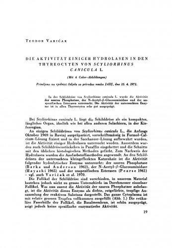 Die Akivität einiger Hydrolasen in den Thyreocyten von Scyliorhinus canicula L.