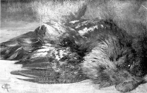 Medović, Mato Celestin (1857-11-17 1920-1-20) : Mrtva priroda (pijetao)
