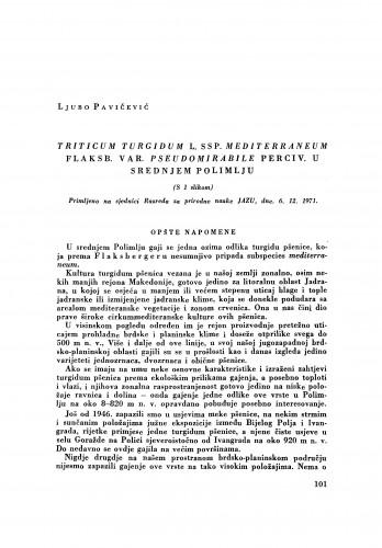 Triticum turgidum L. ssp. mediterraneum Flaksb. var. pseudomirabile Perciv. u srednjem Polimlju