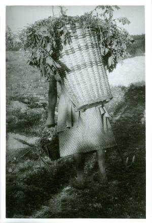 Zora Juratkova nosi koš z napravun [Gavazzi, Milovan (1895-1992) ]