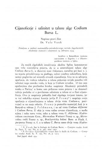 Cijanoficeje i salinitet u talusu alge Codium Bursa L.