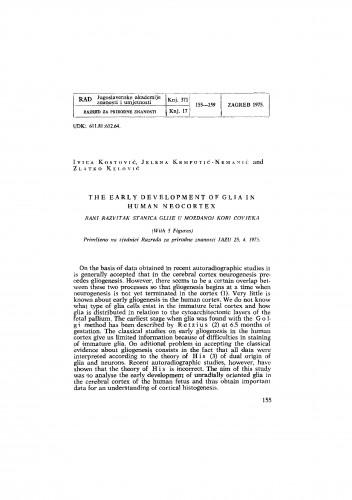 The early development of glia in human neocortex