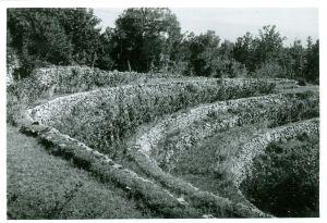 Matokov kapužnjak. Zapušćene lehi s prezidami. [Gavazzi, Milovan (1895-1992) ]