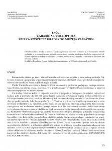 Trčci Carabidae, Coleoptera - Zbirka Košćec iz Gradskog muzeja Varaždin / Ines Bušnja