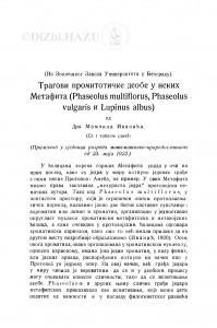 Tragovi promitotičke deobe u nekih Metafita (Phaseolus vulgaris i Lupinus albus) / M. Ivanić