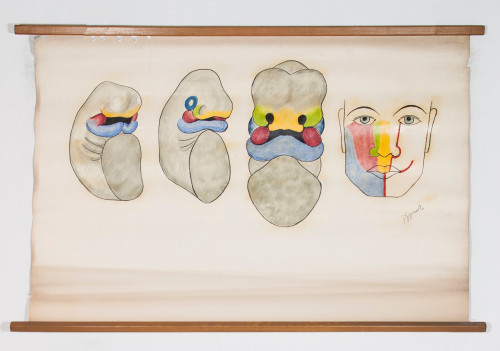 Embrionalni razvoj gornje i donje čeljusti