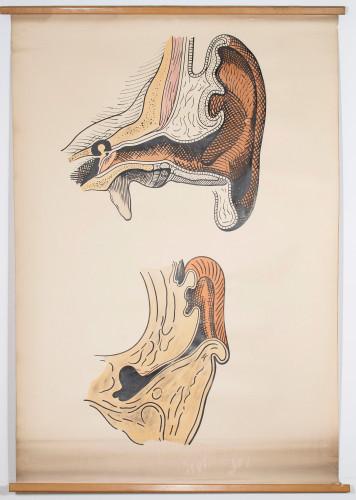 Vertikalni (koronalni) presjek kroz uho u odraslog (gore) i u novorođenčeta (dolje)
