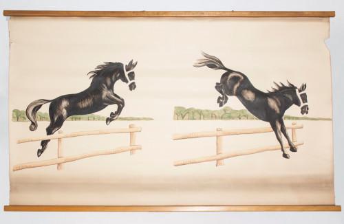 Utjecaj otolita na uspješan konjski preskok prepone (položaj se glave u prostoru ne mijenja!)