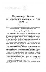 Morfologija bacila iz korenovih kvržica u Vicia sativa L. / P. Đorđević