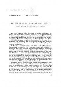 Effect of UV rays on rat blastocyst / N. Škreb, M. Müller i Lj. Hofman