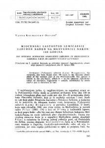 Miocenski gastropod Semicassis saburon nađen u Medvednici nakon 100 godina / Vanda Kochansky-Devidé