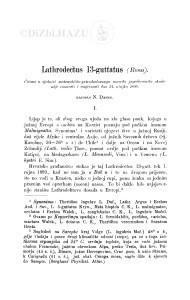 Lathrodectus 13-guttatus (Rossi) / N. Damin