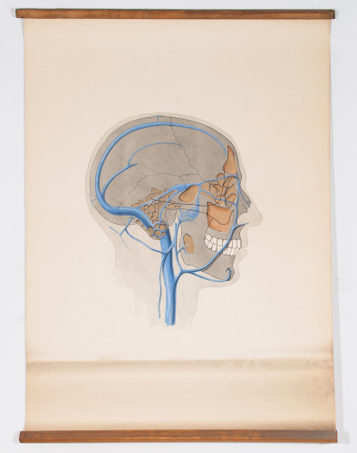 Anastomoze velikih vena glave i vrata s venama paranazalnih šupljina