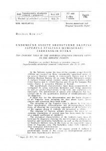 Endemične svojte srodstvene skupine Asperula staliana (Rubiaceae) Jadranskih otoka / B. Korica