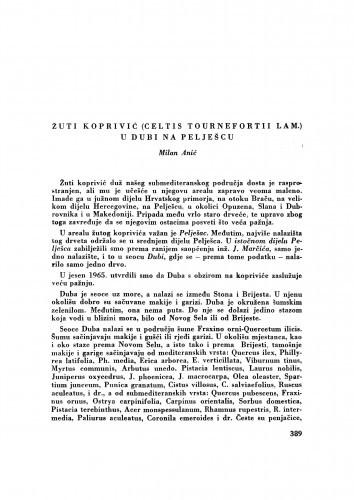 Žuti koprivić (Celtis tournefortii lam.) u Dubi na Pelješcu / M. Anić
