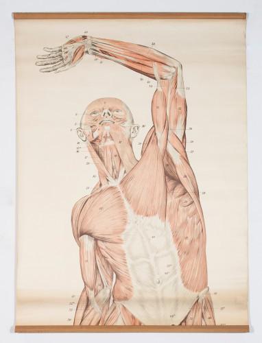 Anatomski prikaz muskulature gornjeg dijela tijela