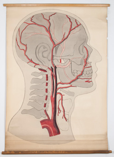 Arterije glave i vrata