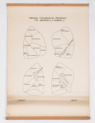 Bronho-pulmonalni segmenti prema Jacksonu i Huberu